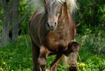 *horses* / by Aidee Galindo Aramburo