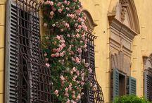 kwiaty w oknach / kwiaty w oknach