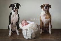 gravidez, bebes, cães