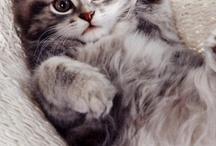 Cute kitties / by Susan Orr