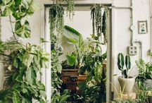 Plants about the house