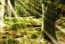природа (1) / пейзажи, природа, красивые  виды