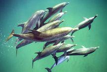 WildQuest 2014 / Our 2014 dolphin retreats schedule.
