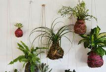 Espace Vert / Aménagement de Jardin