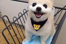 Los Perritos / fotos lindas de perritos