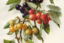 vintage botanic sketch