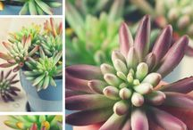 다육 식물