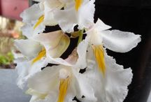 Orchids and its Charms