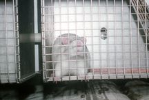 Please sign and share these  petitions