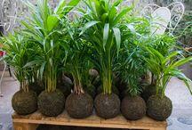 Plantes et jardinage