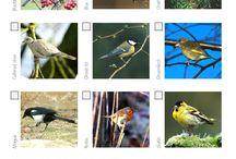 Big Schools' Birdwatch Resources
