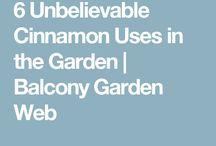 Cinnamon in the garden