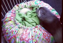 Ferrets toys and entertainment ideas
