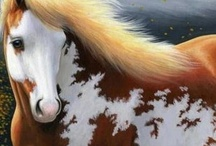Pferdefotos / Alles über Pferde