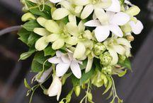 南国系の花