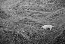 My photography / Black & White Film Photography