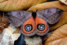 Motýli a Můry