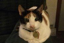 Sammy the cat / My cat!!!