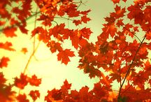 All Things Fall / All things autumn related / by Nyeisha Brown