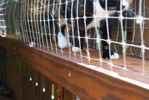Außengehege für Katzen