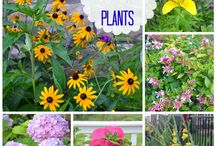 Plants -Love Sun