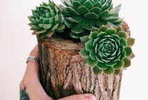 fancy plant pots! / >>]...[<<