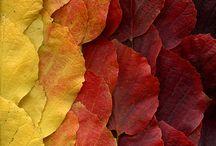 Leaves løv