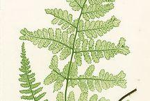 Plants pic / Green inspiration