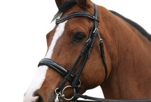 HORSES ♥ FASHION / Alles voor je beste maatje!  / by Epplejeck Superstores