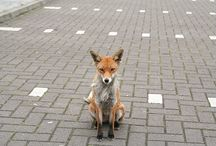 =:> Fox & Road