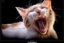 Pics of Cats Pets /// Fotos de Gatos Mascotas / German Canon Photography / www.germancanon.com