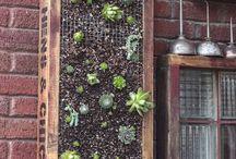 Garden / by Stefanie Allen
