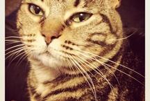 Pretty littles Cats...
