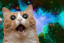 CATS ^•^