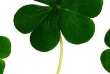 St Patrick's Day Clothing & Fun / St Patrick's Day Clothing & Fun