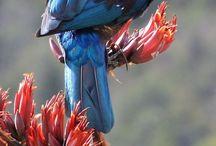 Aotearoa New Zealand Unique Fauna & Flora