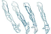 Anatomy-Arms