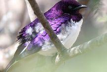 Birds/Birdhouses / by Cindy Johnson