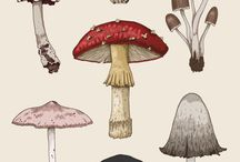 Dibujos hongos