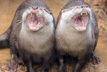 zpívající zvířata