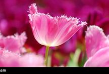 Beautiful flowers / Beautiful & colorful flower facebook cover for your timeline. Make your timeline cover look colorful and beautiful with them.