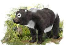Pygmy Panda