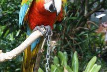 the parrot place kerikeri 1 mission rd