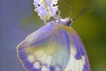 Foto motýľ / Photo buterfly