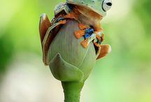 Hayvan Fotoları Dekorasyon için