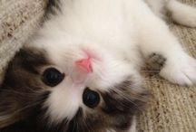 Feline favourites!