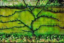 Garden Ideas / by Sarahí Wilson