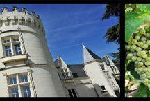Château d'Eternes / Tel le Château de la Belle au bois dormant, le Château d'Eternes est un bijou à dévoiler. L'abbesse de Fontevraud ne s'était pas trompée : ce château situé aux confins du Poitou, de l'Anjou et de la Touraine était son clos préféré. Amateur de patrimoine et de vins de Saumur, faites une escale : admirez les caves souterraines et dégustez le Saumur blanc, le Saumur brut et le Saumur Puy Notre Dame.