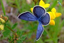 Butterflies / by Charity Reece