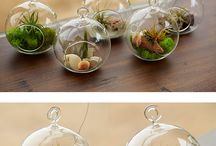 Air Plants glass